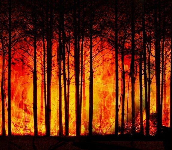 forest_fire_3836834_1280